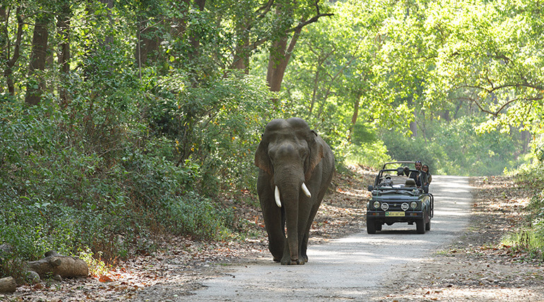 HOW TO BOOK ONLINE TRIP TO JIM CORBETT NATIONAL PARK FOR JUNGLE SAFARI